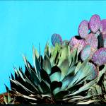 """Agave and Prickly Pear on Turquiose Wall P1030484"" by almarphotography"