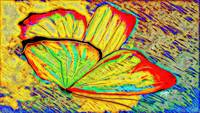 Abstract Butterfly Art 2