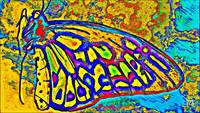 Abstract Butterfly Art 3