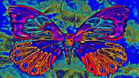 Abstract Butterfly Art 5