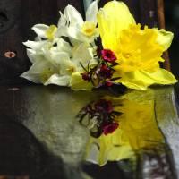 SpringtimeColor gallery