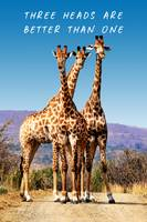 Three Girafes 3 heads better than one