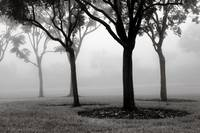 Trees in the Fog No. 06