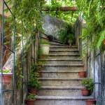 """""""Potted plants and a dog on the steps"""" by TomGomez"""