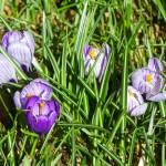 """""""Spring"""" by vpicks"""