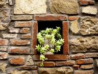 A Plant in the Wall