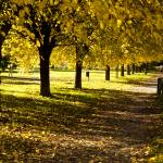 """Autumn in Parco di Villa Angeletti"" by raetucker"