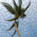 """Boracay Palm"" by dylwalters"