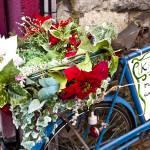 """Poinsettia Cycle"" by raetucker"
