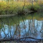 """Spring Reflections"" by KsWorldArt"