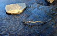 Creek Rock Abstract