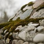 """A Rolling Stone Gathers no Moss"" by robertllynch"
