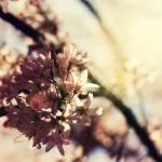"""Floral 17"" by robertllynch"