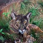 Florida Panther- A state treasure
