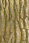 """Tree Bark Texture Vertical by James """"BO"""" Insogna"""