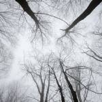 """Barren trees in winter fog on Ripshin Mountain"" by jcarillet"