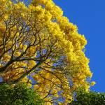 """Gold Tree"" by joeyartist"