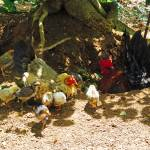 """""""Chicken Family"""" by joeyartist"""