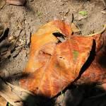 """""""Colorful Leaf"""" by rhamm"""