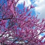 """""""Spring Bloom"""" by globetrotter1"""