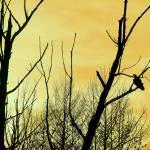 """Turkey Vulture Waiting"" by KsWorldArt"