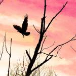 """Turkey Vulture Flight at Twilight"" by KsWorldArt"