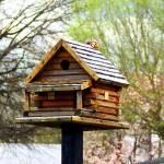 """Birdhouse"" by globetrotter1"