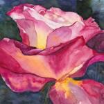 """""""Sunlit Rose"""" by lindalou2"""