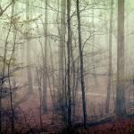 """Jungle Journey Path"" by SkipNall"