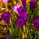 """""""Spring Blooms"""" by karolsstuff"""