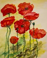 Watercolor painting of poppies