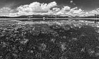 Tuolumne Meadows (Black and White)