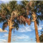 """Palms Against a Bright Blue Sky"" by ChrisCrowley"