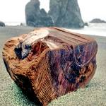 """Driftwood on Sonoma County Beach"" by Wintercreeks"