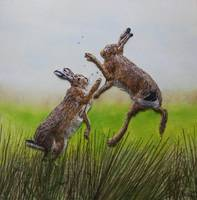 The Rare Moorland Hare