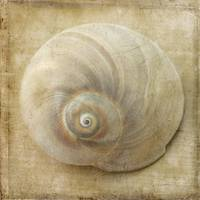 White Sea Shell Still Life