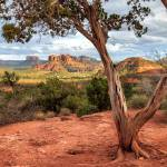 """A Tree In Sedona"" by jameseddy"