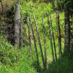 """Fence Gate"" by rhamm"