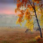 """Foggy Country Morning"" by zenin"