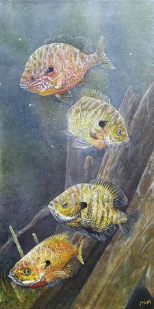 Sunfish Quartet