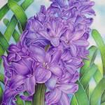 """Hyacinth"" by joeyartist"