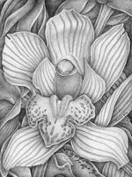 Orchid_5