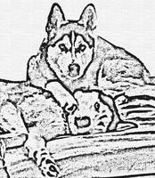 Abstract Ink Drawing Huskies B41516