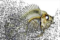 Dot Matrix Fish Fuse Abstract