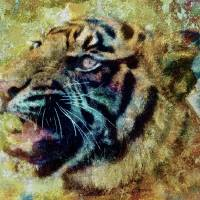Tiger Art Prints & Posters by Lisa Rich