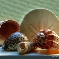 Sea Shells on a Window Sill by Richard Thomas