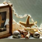 """Sea Shell Macro Still Life"" by Wintercreeks"