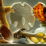 """Sea Shell Macro"" by Wintercreeks"