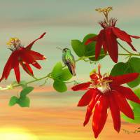 Hummingbird And Passion Flowers   by I.M. Spadecaller