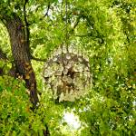 """Chandelier Tree Study 1"" by robertmeyerslussier"